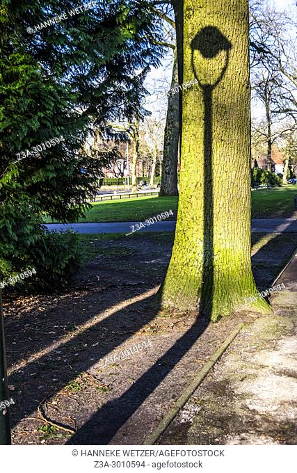 Shadow of a lantern on a tree in Eindhoven, the Netherlands, Europe