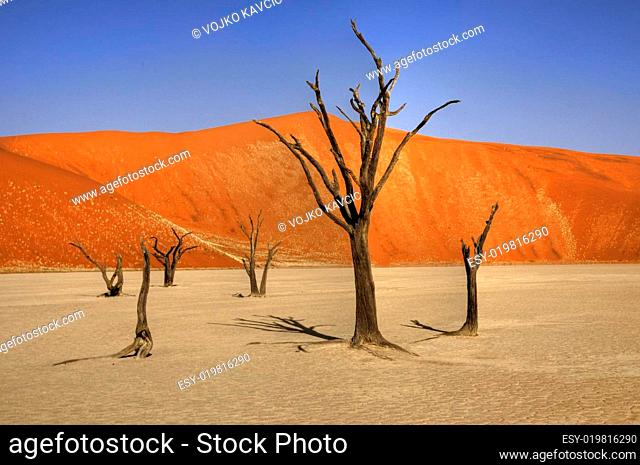 Toto Bäume in der Namib