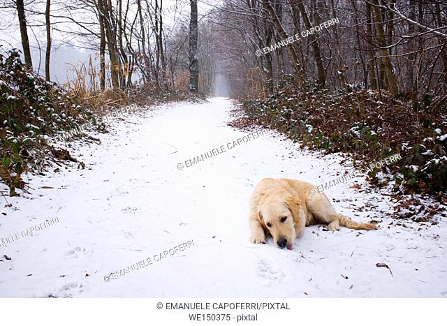 Dog in the snow during a walk in the path in the woods