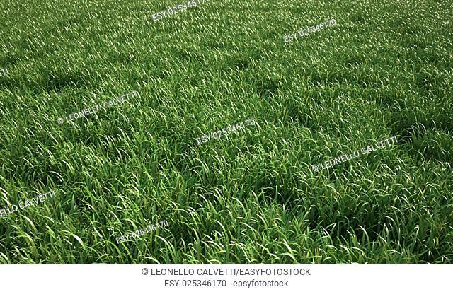 A very green and fresh looking grass field, bird eye view