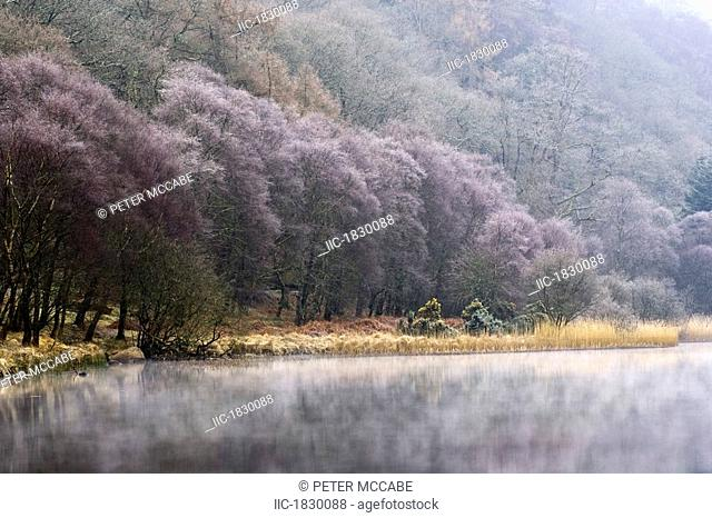 Lower Lake, Glendalough, County Wicklow, Ireland, Hoar frost on trees and mist on lake