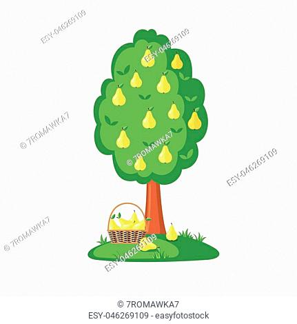 Green Pear tree full of yellow pears icon in flat style isolated on a white background. Vector illustration