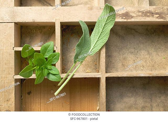 Sage and oregano in type case