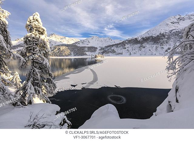 Snow covered trees on the shore of frozen Lake Sils, Plaun da Lej, Maloja Region, Canton of Graubunden, Engadin, Switzerland