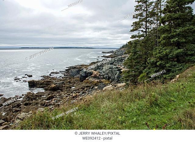 Shoreline near Otter Cove, Acadia Nat  Park, ME