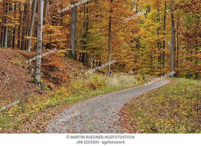 Road in forest with autumn colours. Bavaria, Germany