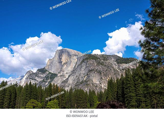 View of mountain forest, Yosemite National Park, California, USA