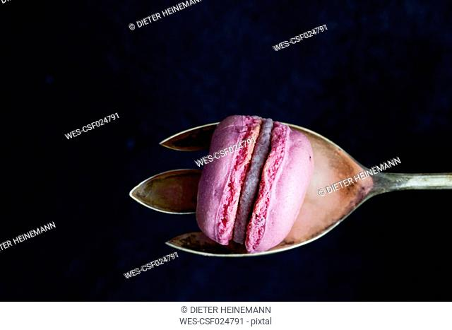 Pink macaron on silver spoon in front of black background