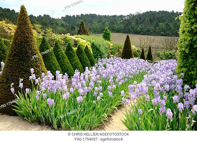 Display of Irises and Topiary Trees at Val Joannis Garden Pertuis Provence France