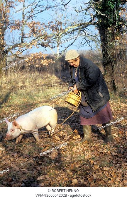 SUS SCROFA DOMESTICAPIGFRANCE - PERIGORDMARTHE AND PIG TITINE SEARCHING FOR TRUFFLES