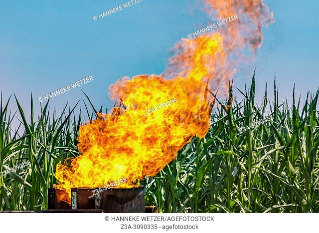 LPG fire burning in front of a corn field, Netherlands, Europe