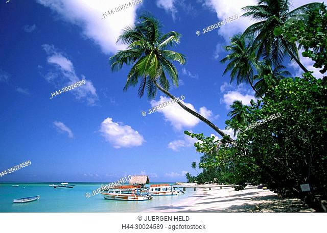 Tobago, Pigeon Point , caribbean sea, beach , palm trees