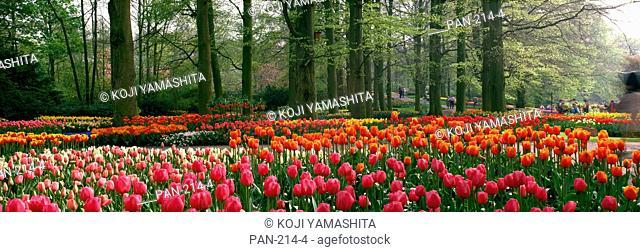 Keukenhof Garden, Lisse, The Netherlands, No Release