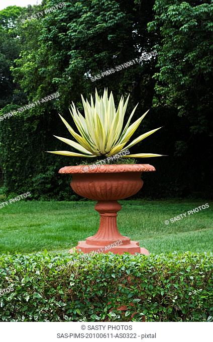 Potted plant in a botanical garden, Lal Bagh Botanical Garden, Bangalore, Karnataka, India