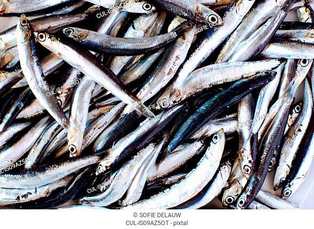 Traditional Italian food, overhead view of fresh anchovies, Campania, Italy