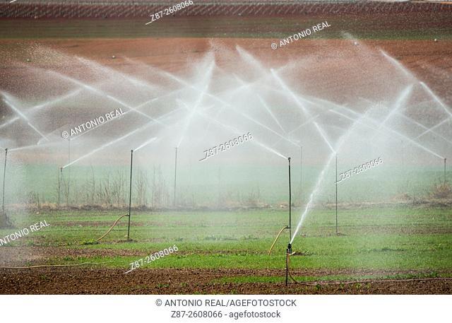 Sprinkling, Pétrola, Albacete province, Castilla-La Mancha, Spain