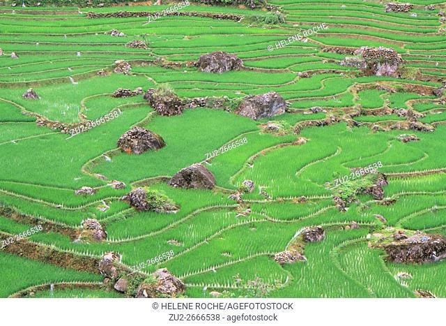 Irrigated rice terrace fields, Sapa surroundings, Vietnam, Asia