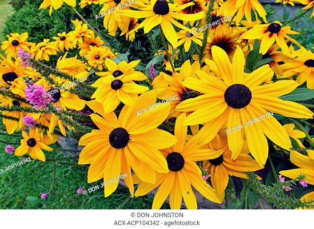 Garden flowers, Greater Sudbury, Ontario, Canada