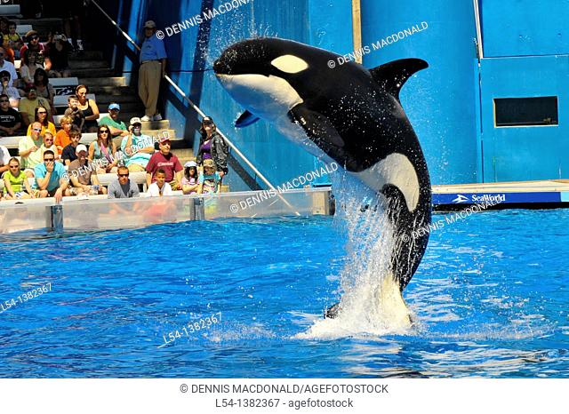 Sea World Adventure Theme Park Orlando Florida Shamu Killer whale