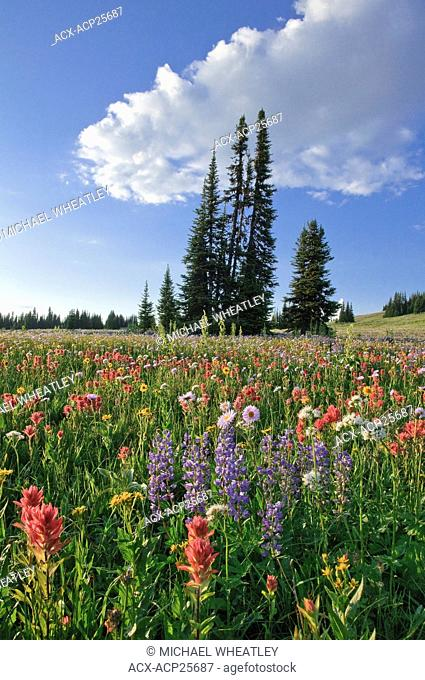 Wildflowers, Trophy Meadows, Wells Gray, Provincial Park, BC, Canada