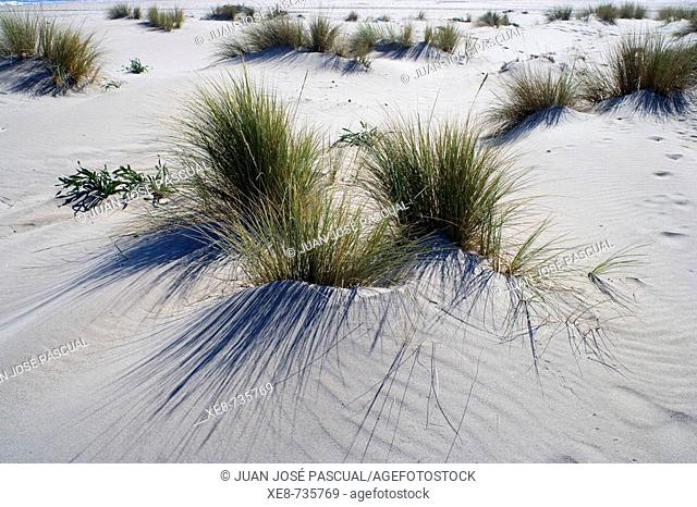 Dunes of San Jose and Monsul beach, Cabo de Gata-Nijar Biosphere Reserve. Almeria province, Andalucia, Spain