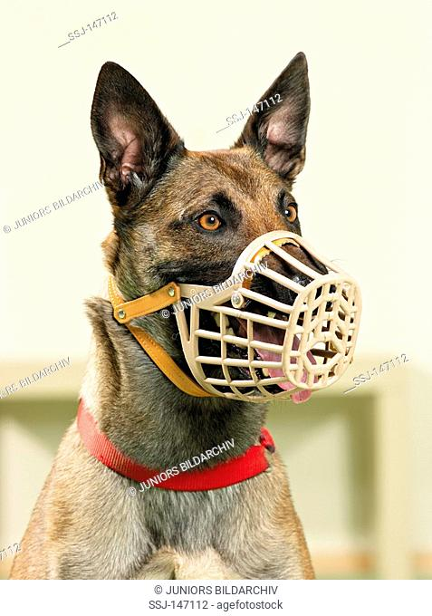 malinois with muzzle / restrictions: Tierratgeber-Bücher / animal guidebooks
