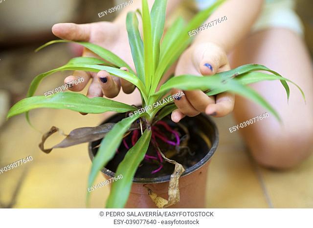 Girl gardener transplanted a plant
