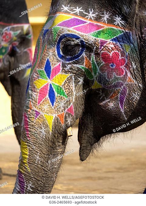 Decorated elephant in Jaipur, Rajasthan, India