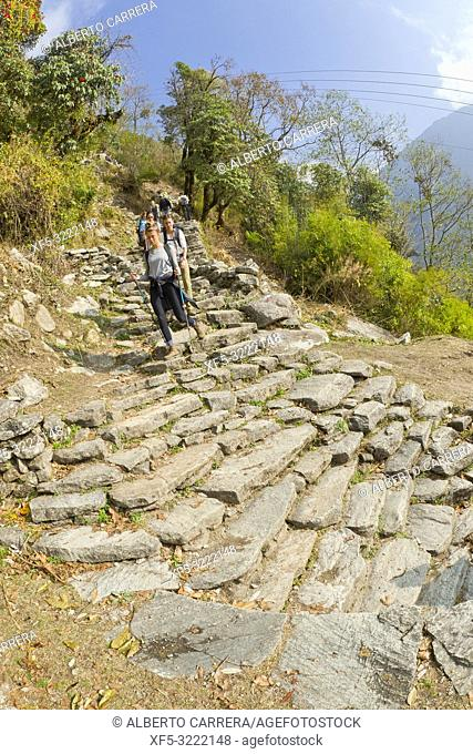 Hikkers on Route, Stone Stairs, Mountain Footpath, Trek to Annapurna Base Camp, Annapurna Conservation Area, Himalaya, Nepal, Asia