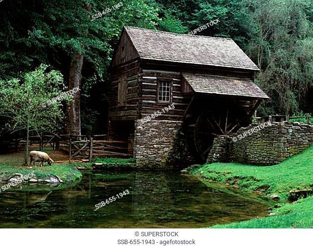Watermill in a forest, Old Cuttalossa Mill, Bucks County, Pennsylvania, USA