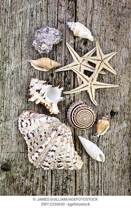 Sea shells and starfish on rustic timber decking
