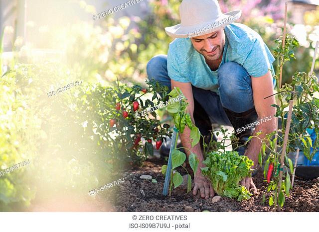 Young man in garden, tending to plants