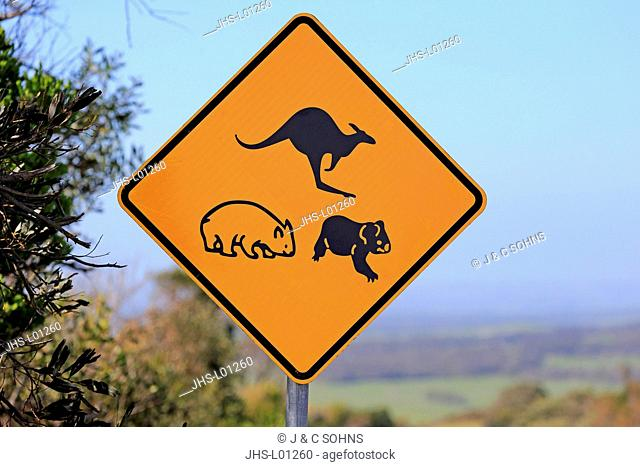 Traffic sign, Protection for Koala Wombat Kangaroo, Victoria, Australia