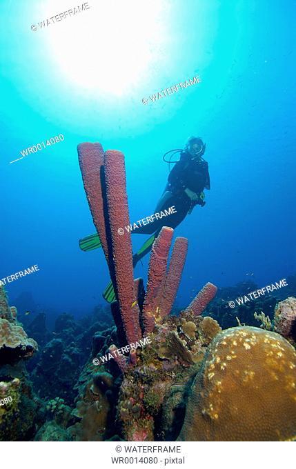 Scuba Diver and Sponge, Caribbean Sea, Netherland Antilles, Curacao