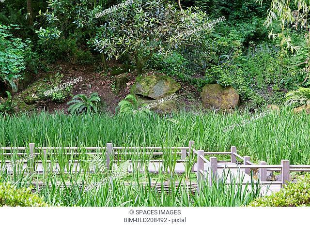 Iris grow in koi pond around the Zig Zag Bridge in the traditionally designed Japanese garden