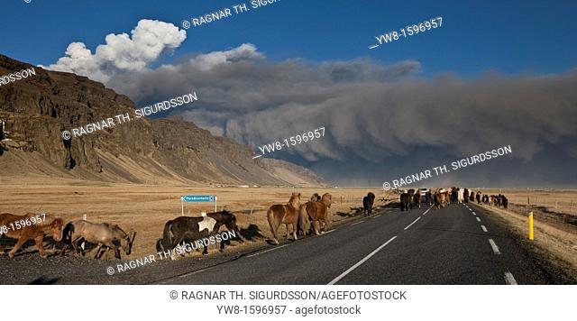 Horses on road with ash cloud from Eyjafjallajokull Eruption, Iceland 2010