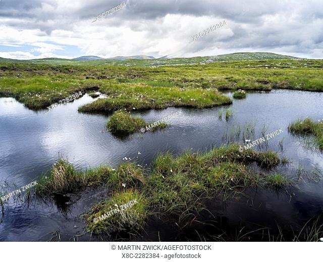 Isle of Lewis, part of the island Lewis and Harris in the Outer Hebrides of Scotland. Landscape on Uig with Cotton Grass (Eriophorum angustifolium) and pond