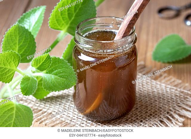A jar of silver spurflower syrup against common cold with fresh Plectranthus argentatus plant