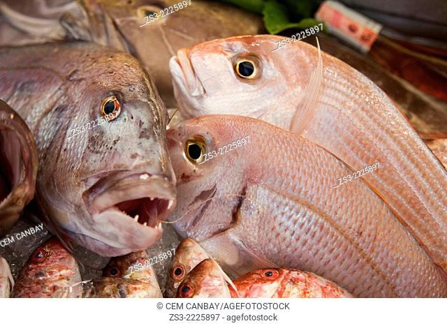 Fish in the freezer, Bodrum, Mugla, Aegean Sea, Turkish Riviera, Turkey, Europe