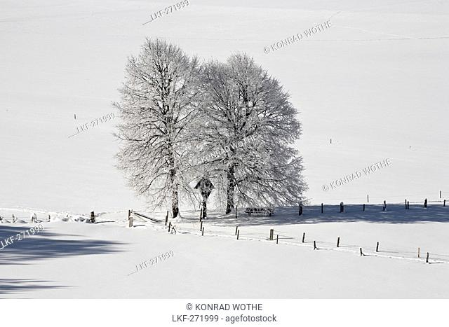 Bavarian winter scenery with trees, Upper Bavaria, Germany, Europe