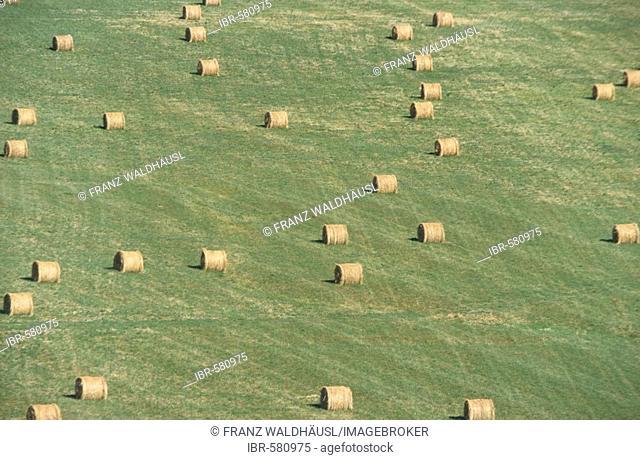 Staw Harvest, Gorges de la Nasque, Provence, France