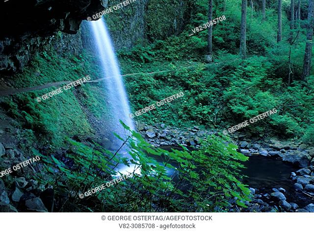 Ponytail Falls, Columbia River Gorge National Scenic Area, Mt Hood National Forest, Oregon