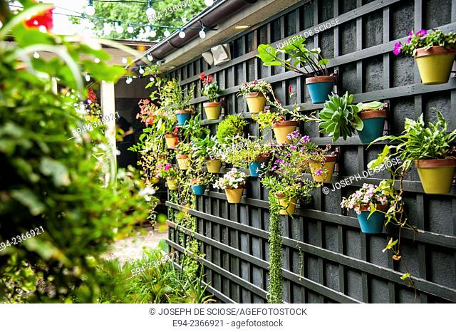 Succulent plants growing in pots mounted to a wall in a patio area