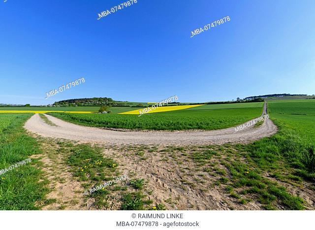 Field path hairpin curve in spring, Reicholzheim, Wertheim, Taubertal, Tauberfranken, Main-Tauber-district, Baden-Württemberg, Germany