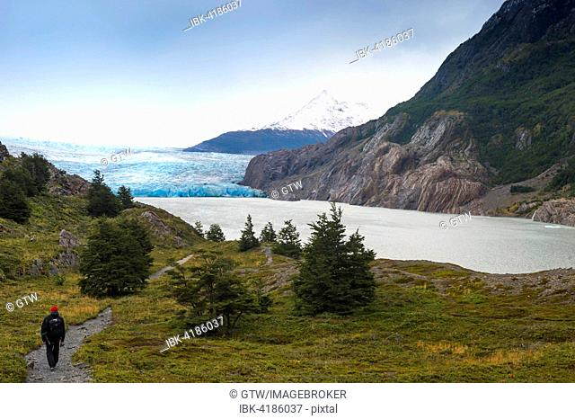 Lago Grey and Grey Glacier, Torres del Paine National Park, Chilean Patagonia, Chile