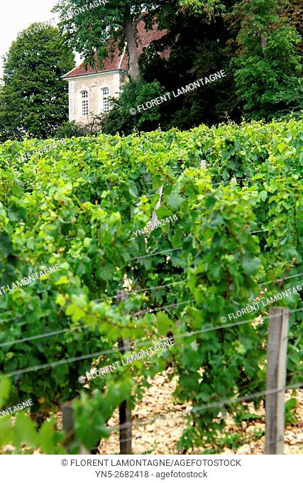 France, property of Chateau castle of Beru in Yonne departement in Burgundy known for it famous Chablis wine