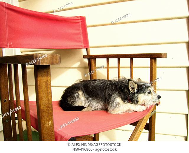 Cute dog on directors chair