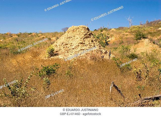 Field with Termiteiro, Caracol, Piauí, Brazil