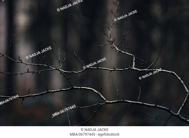 Bald branches in the forest