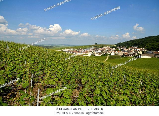 France, Marne, Verzenay, mountain of Reims, vineyard of Grand Cru classified Champagne